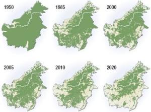 In 70 anni le foreste in Borneo si sono dimezzate